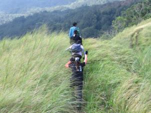 grass land 6