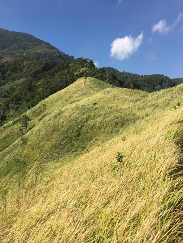 GRASS LAND 7